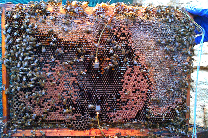 frame from a bee hive with accelerometers embedded
